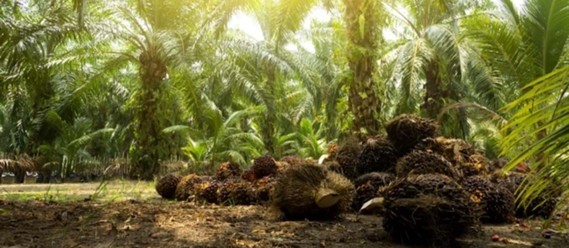 Towards Industry 4.0 in the Palm Oil Mill